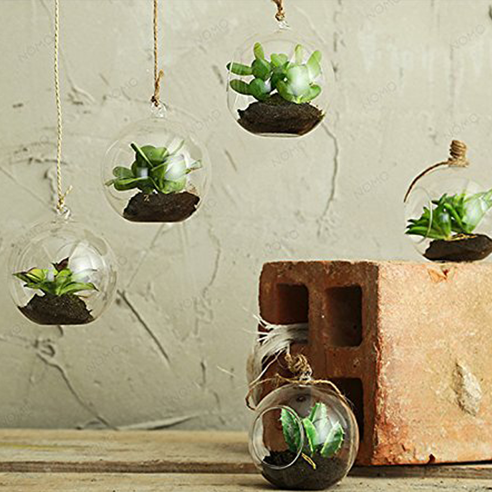 Terrario Per Piante Grasse mini piante grasse in bolla di vetro