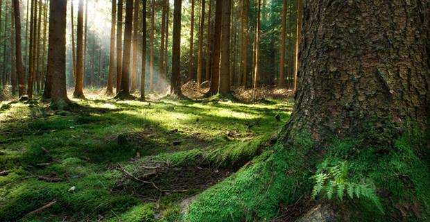 architettura-legno-boschi-a