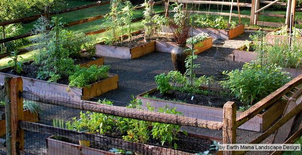 Cani In Giardino Progettare Spazi Verdi Per Gli Amici A 4 Zampe