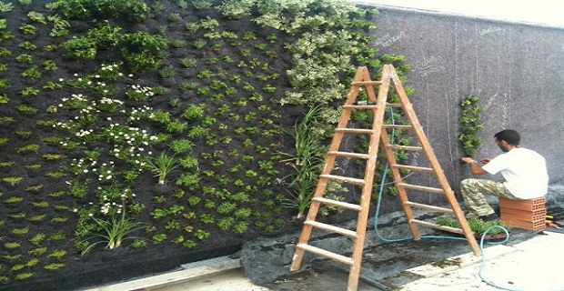 muro-vegetale-b