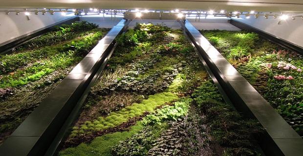 muro-vegetale-e