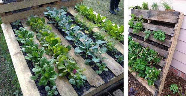 Come creare un orto e una panca per esterni con i pallet for Come stimare i materiali da costruzione per la costruzione di case