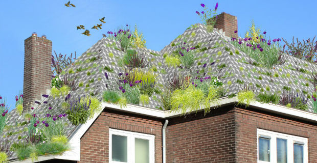 tegole-tetto-verde-olanda