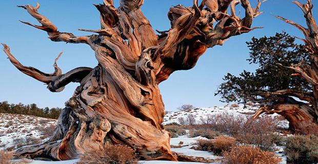 Alberi le pi belle opere d arte firmate madre natura - Immagini da colorare della natura ...