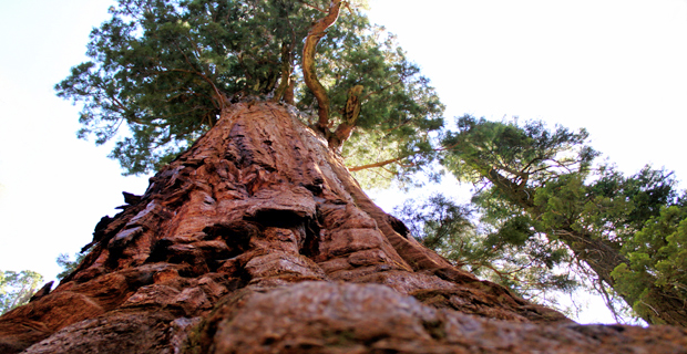 National Park della Sierra Nevada Meridionale, California, Stati Uniti.