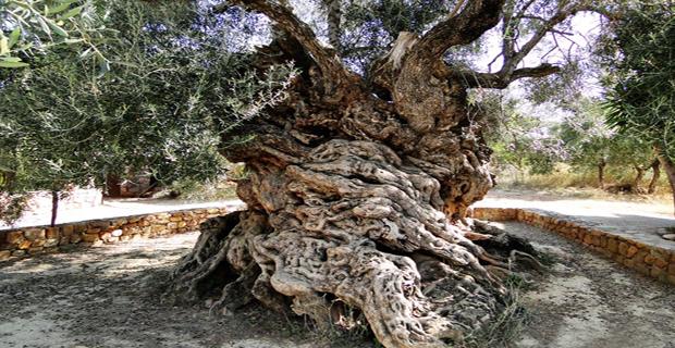 Località di Vouves, Creta, Grecia.