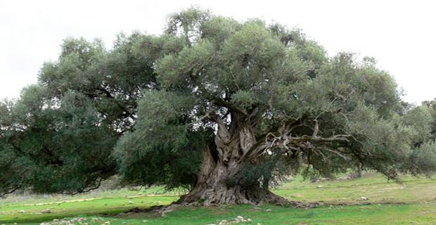 Luras, provincia di Olbia-Tempio, Sardegna, Italia.