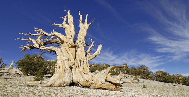 caption:White Mountains, contea di Inyo County, California, Stati Uniti.