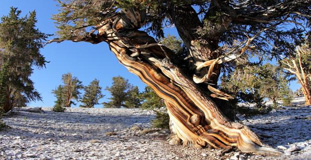 caption:White Mountains, California, Stati Uniti.