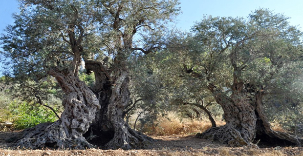 Località di Bacheale, Libano.