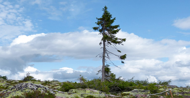 Fulufjällets National Park, Svezia.