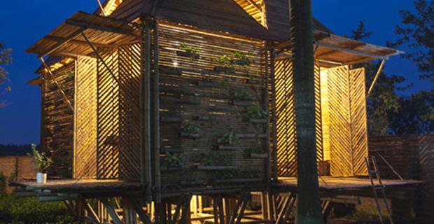 bambu-calamita-vietnam-e