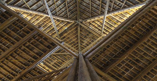 bambu-calamita-vietnam-f