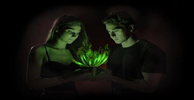 bioluminescenza-luce-piante-a