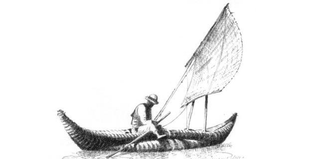 canna-palustre-c1