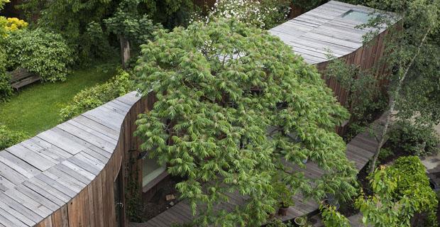 casa-albero-londra-a