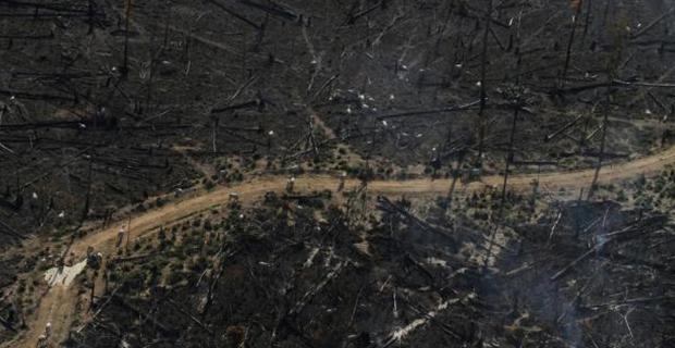 deforestazione-amazzonia-d