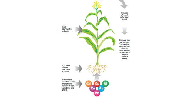 Come funzionano le piante per la fitodepurazione dei terreni