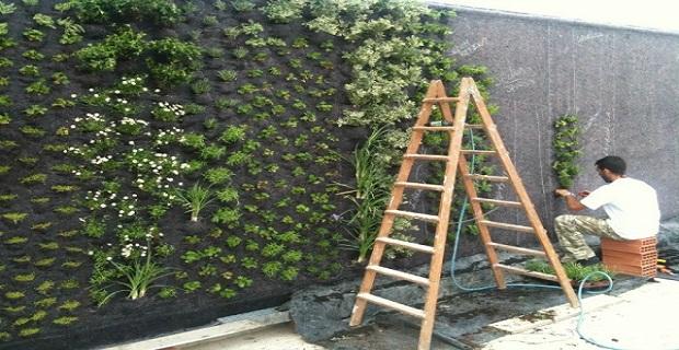 Tecniche per la realizzazione delle facciate verdi parte 3 - Pareti verdi per interni ...