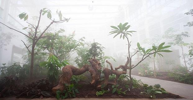 orto-botanico-padova-i