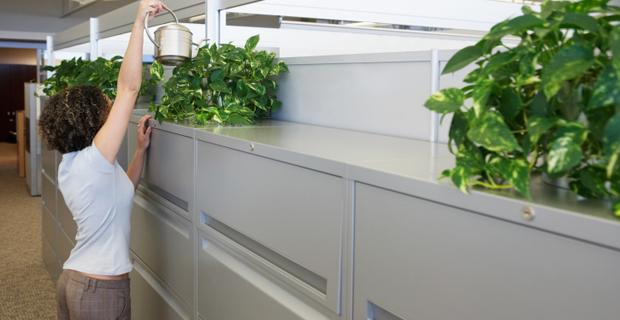 Le piante che incrementano la produttivit nei luoghi di - Piante da ufficio resistenti ...