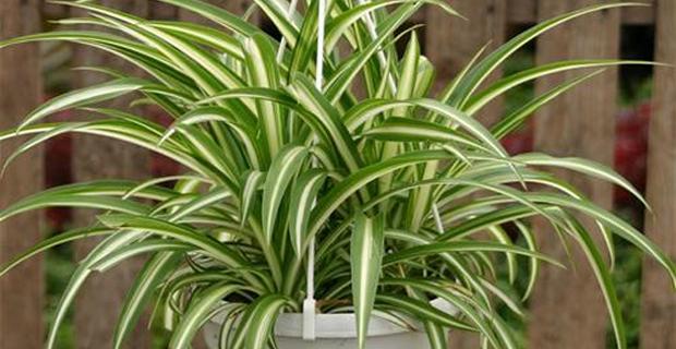 Le piante che incrementano la produttivit nei luoghi di - Piante interno poca luce ...