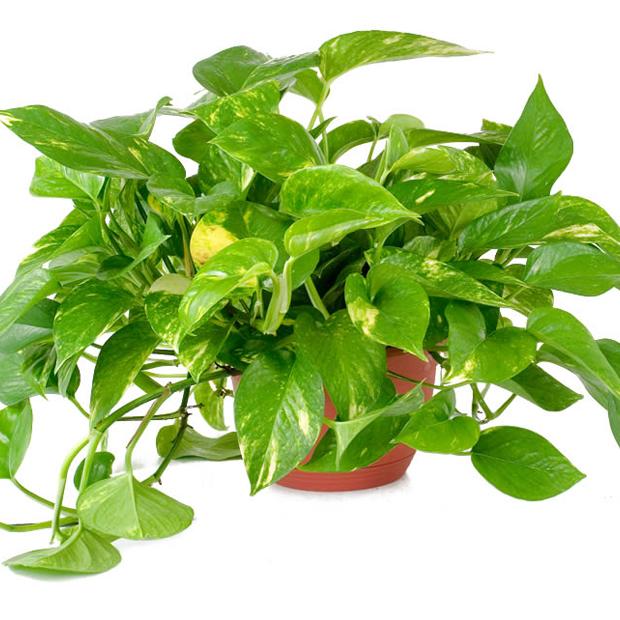 Piante Ufficio Poca Luce : Le piante che incrementano la produttività nei luoghi di