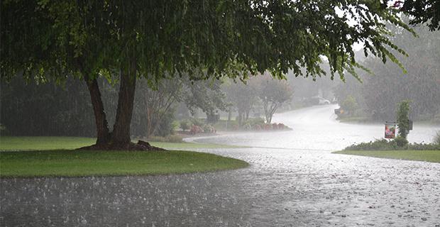 Rain gardens giardini fioriti per accogliere l 39 acqua - Piccoli giardini fioriti ...
