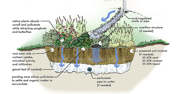 rain-garden-acqua-b