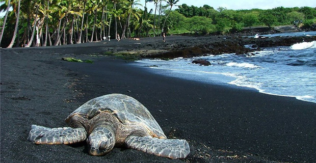 caption:La Punaluu Black Sand beach nelle Hawaii