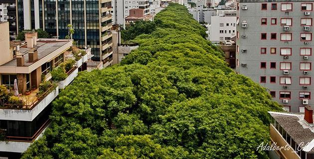 strada-verde-brasile-b
