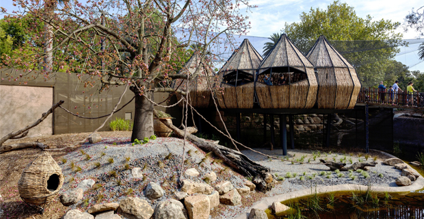 zoo-melbourne-lemuri-a