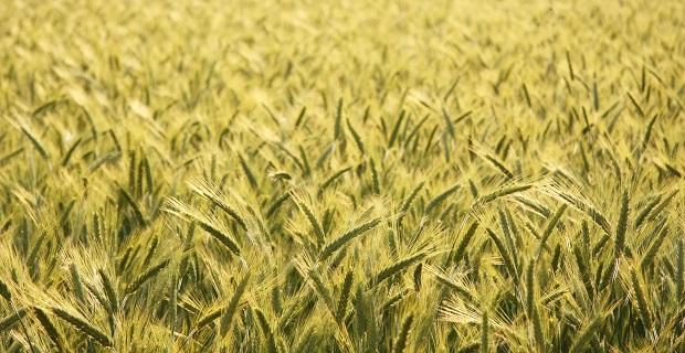 agricoltura-bio-c