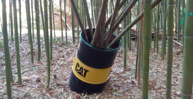 bosco-bambu-bambuseto-c