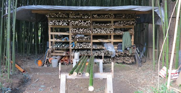 bosco-bambu-bambuseto-d
