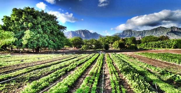 Città del Bio all'Expo 2015: sistemi urbani sostenibili dall'agricoltura