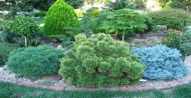 Il bosco in casa un oasi di verde con le conifere nane - Immagini di aiuole da giardino ...