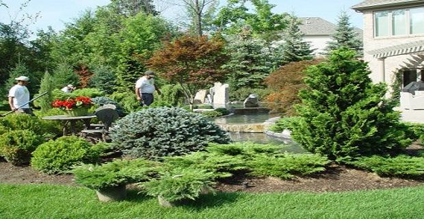 Il bosco in casa un oasi di verde con le conifere nane for Conifere da giardino