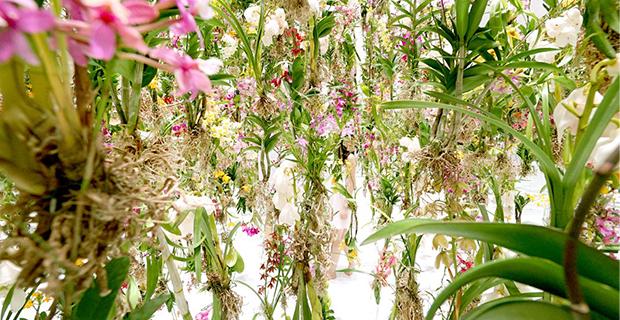 floating-flower-garden-c