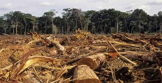 legno illegale-b