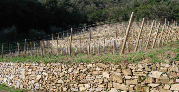 caption: Muri a secco per terrazzamenti su vigna in Toscana .