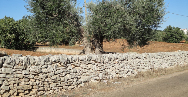 caption: Muro a secco pugliese (in Puglia la disposizione, il tipo di finitura e la dimensione delle pietre varia addirittura da zona a zona).
