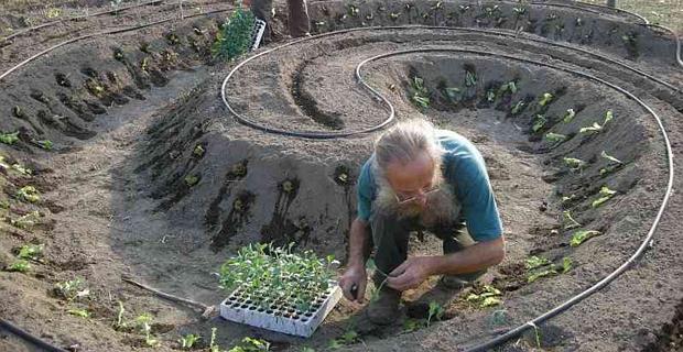 Le Piante Aromatiche : Agricoltura sinergica caratteristiche e vantaggi di un