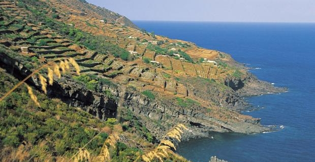 caption: una vista dei terrazzamenti di Pantelleria.