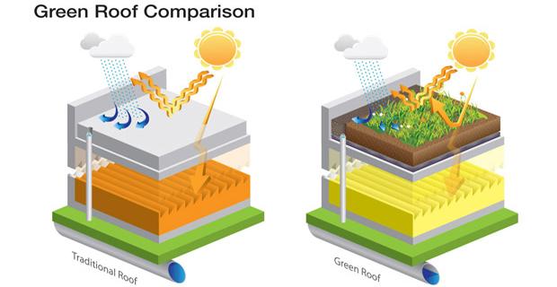 piante-tetti-verdi-b