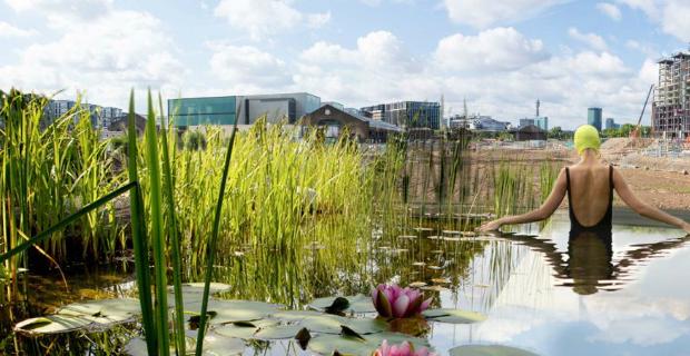 Piscina sostenibile senza cloro: le piante purificano l'acqua