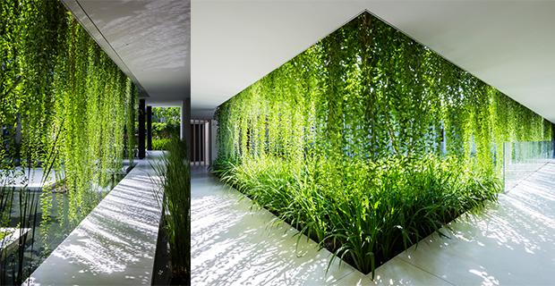 Piante per parete verticale idea creativa della casa e for Bel design della casa