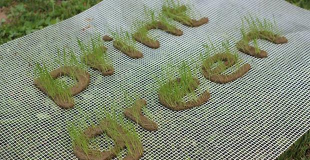 stampanti-3d-piante-h