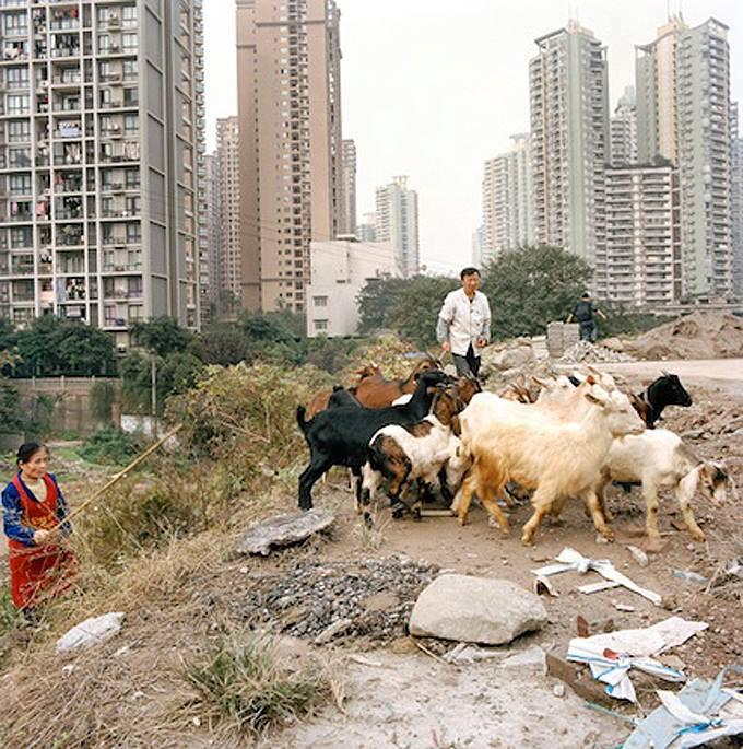 urban-farming-cina-e