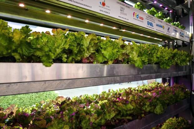 vertical-farm-expo-b